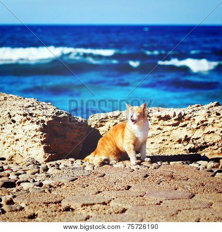 Coastline With Ginger Tabby Roar Cat