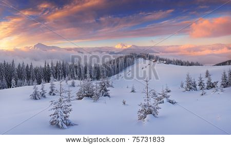 Beautiful winter landscape. Mountain panorama at sunrise. Christmas view. Carpathians, Ukraine, Europe