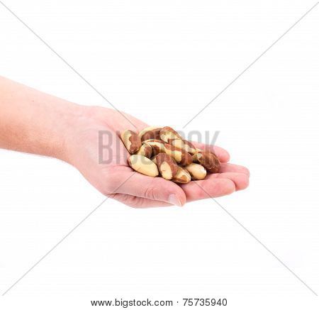 Hand holding brazil nuts.