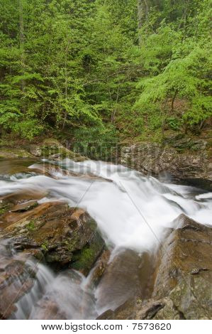 Rapids On Stream In Forest