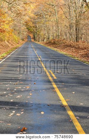 Asphalt road into the autumn forest - Shenandoah National Park, Virginia - USA