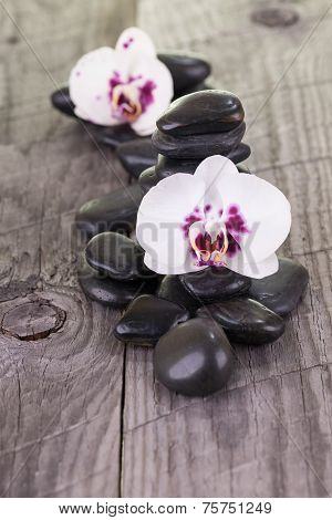 White Moth Orchids And Black Stones On Weathered Deck