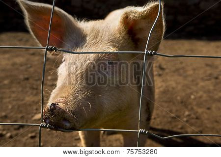 Hungry Wire Fencing