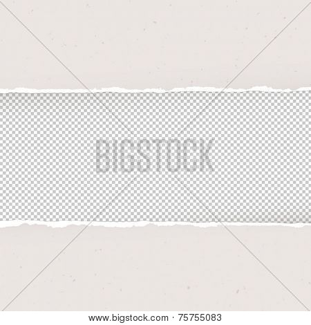 Torn paper on transparent background. Design template, Vector