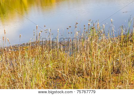 Marsh Grass and Reflections