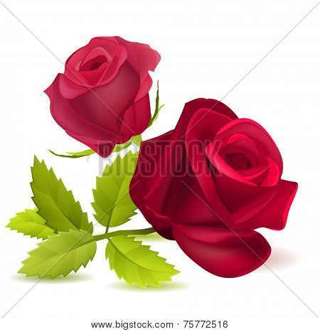 Realistic red rose isolated on white. Vector illustration