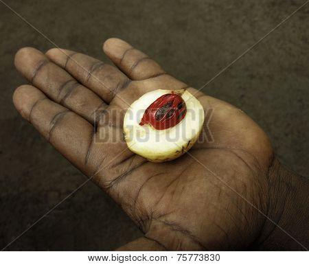 Mace Within Nutmeg Fruit