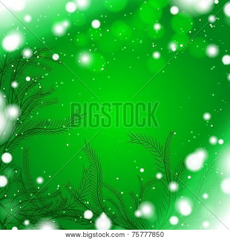 Green winter background with firry branches