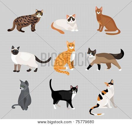 Set of cute cartoon kitties or cats