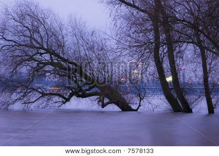 Trees at the Banks of Rhine in Winter