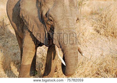 One Day Of Safari In Tanzania - Africa - Elephants