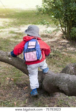 Child Climbing Over Tree