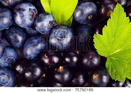 Closeup View Blueberries And Blackcurrants Leaves Background