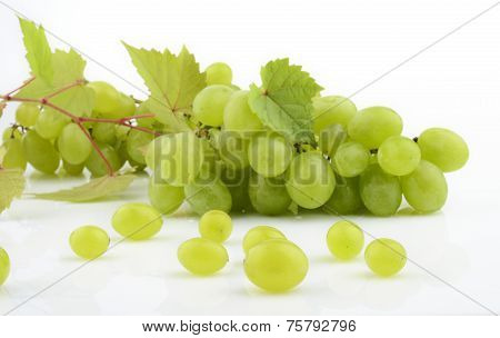 Bunch Of White Grapes On White With Vine Leaves Branch
