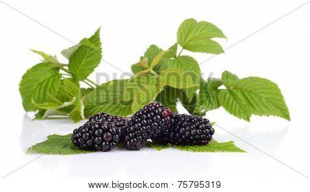 Studio Shot Of Three Fresh Blackberries With Leaves In Background