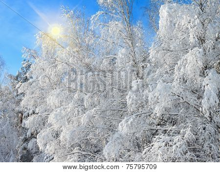 Winter landscape with snowy trees after snowstorm