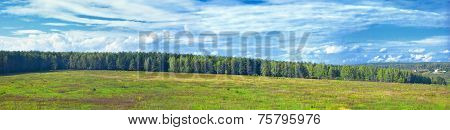 Panoramic landscape of sunny autumn forest