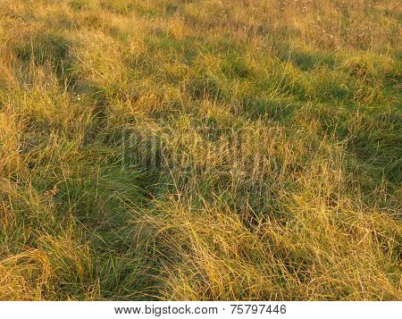 An Image of Dry Weeds