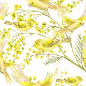 picture of mimosa  - Seamless Spring Pattern with Watercolor Sprig of Mimosa and Yellow Bird - JPG