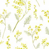 stock photo of mimosa  - Seamless Spring Pattern with Watercolor Sprig of Mimosa - JPG
