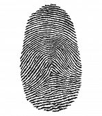 picture of fingerprint  - illustration of a human fingerprint - JPG