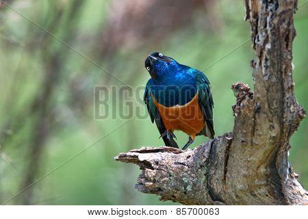 Exotic African Bird