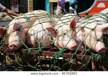 Asian Man Transport Pig