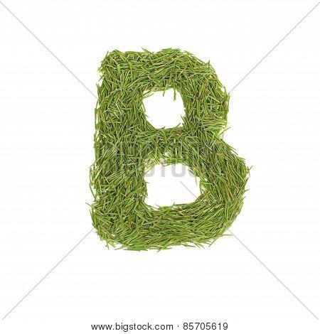 Green Alphabet, Letter B