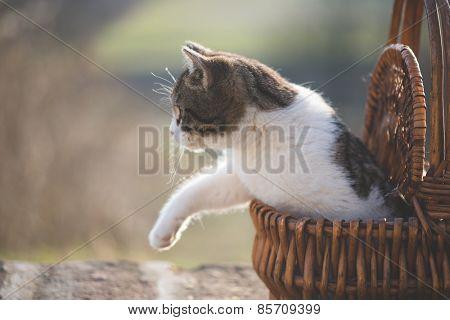 Little cat in wicker basket