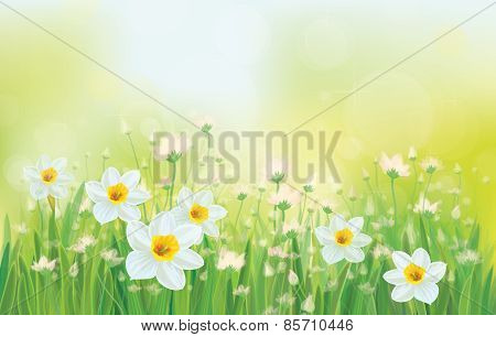 Vector daffodil flowers on sky background.