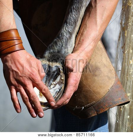 Blacksmith Hands showing Horse hoof