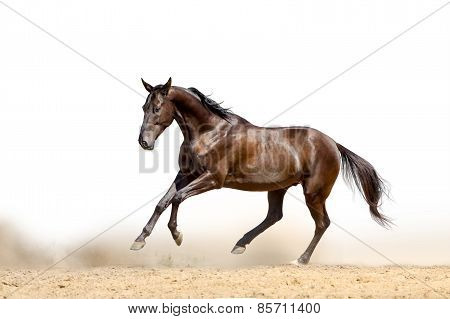 Horse On A White