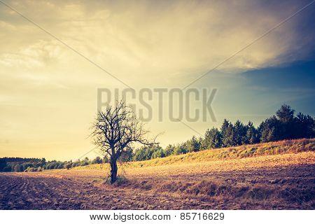 Vintage Photo Of Plowed Field Landscape
