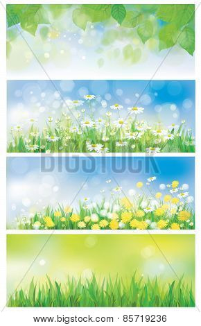 Vector spring nature banners birch tree leaves dandelion and chamomiles.