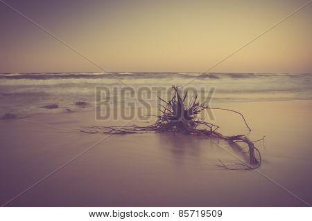 Vintage Photo Of Shore At Landscape