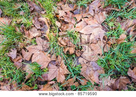 Brown Leaves Fallen On Grass