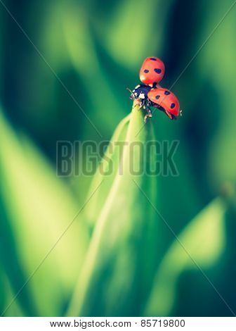 Vintage Photo Of Ladybug On Plant