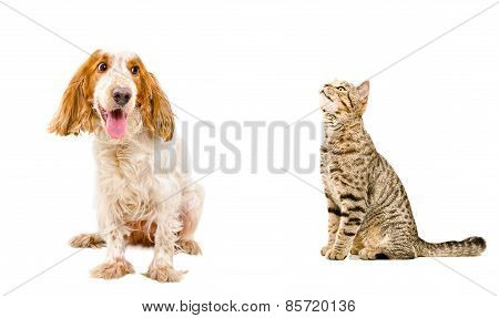 Funny dog and sniffing cat