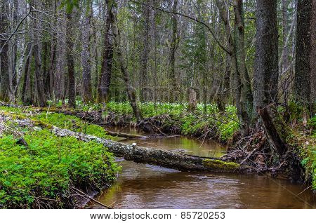 View On River In A Forest