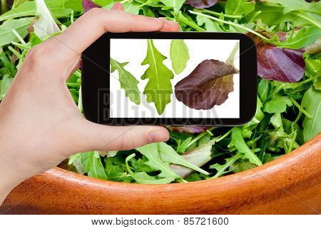 Tourist Photographs Leafs Of Arugula Salad