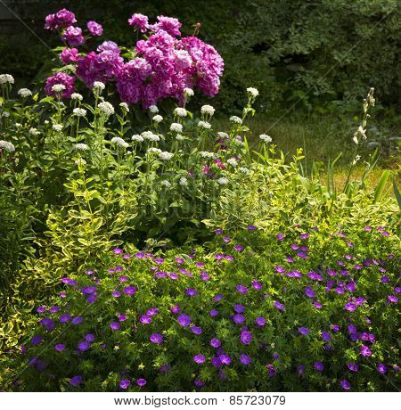 Beautiful summer garden with various plants and flowers blooming basking in sunshine