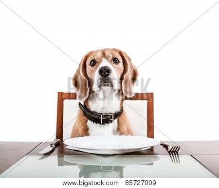 Dog Waiting For A Dinner On The Served Table