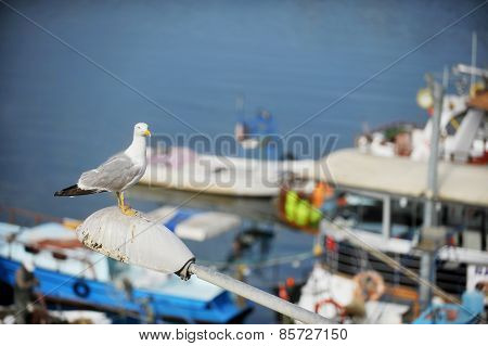 Seagull In A Harbor