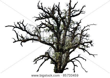 Blooming Dead Tree