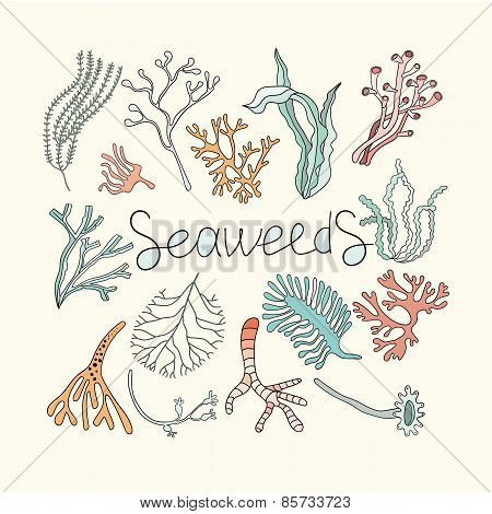 Seaweeds set