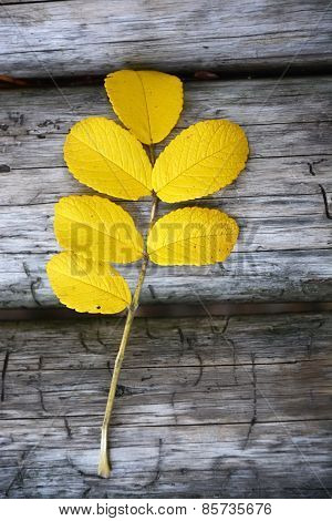 Dog Rose Twig At The Autumn Season On The Wooden Background