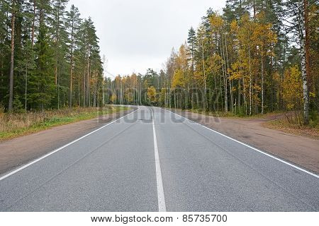 Morning Autumn Landscape- Forest Road And Golden Trees Along