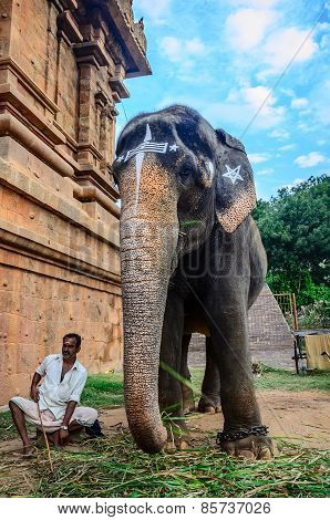 An Unidentified Man Sits Next To An Elephant.