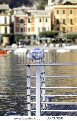 Portofino: seagulls over a sea pier. Color image