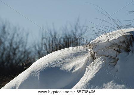 Snow On Dune